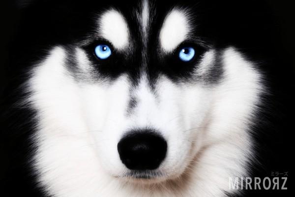 犬っぽい?共通点は?どんなタイプ?犬に関する診断まとめ