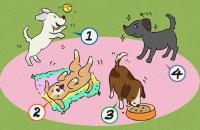 【イラスト性格診断】子犬をもらうなら、どの子にする?