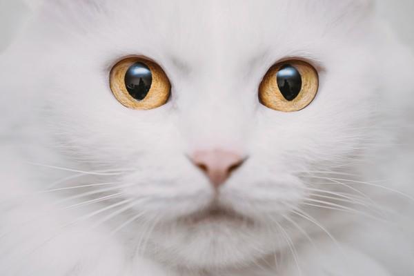あなたが何猫タイプかわかります!猫に関する診断まとめ