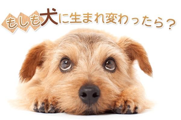あんな犬こんな犬...もしも犬に生まれ変わったら?【犬診断】
