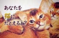 もしもあなたが猫だったなら...あなたを猫にたとえると?【猫診断】