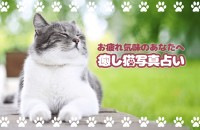 【猫の画像で】癒し猫写真占い【癒されたい!】