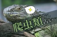見た目は少し、キモコワい…?皮膚を鱗に覆われた、意外に可愛い仲間たち。愛すべき変温動物「爬虫類占い」