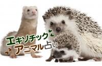 どうして、そんなにキュートなの♡小動物って言うけど、その可愛さは無限大「エキゾチックアニマル占い」