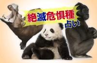 かつては、とても身近だったメダカが?ゴリラやラッコ、日本で大人気のパンダまで!「絶滅危惧種占い」