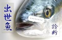 鰤(ブリ)と同じく出世魚。もし鰡(ボラ)だったら?「出世魚診断」