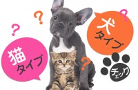 人懐っこい犬人間?マイペースな猫人間?あなたの人柄を、診断します☆「犬タイプ、猫タイプチェック」