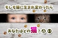 もしも猫に生まれ変わったら、あなたはどの猫?占い